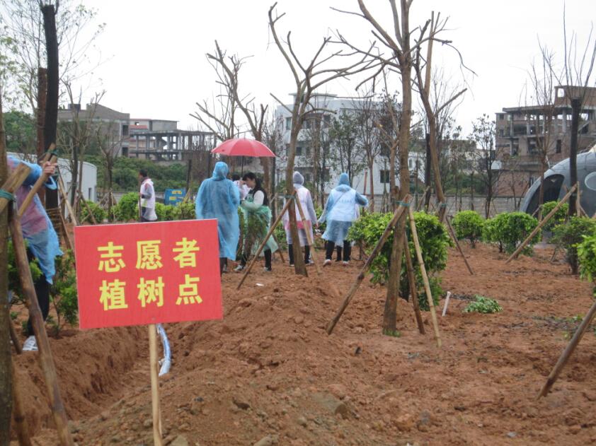 美丽中国梦——团从化市委组织青年团干志愿者参加义务植树活动